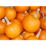 Additional Images for Decorative Dried Accents Pie Pumpkins