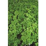 "Additional Images for 4.5"" Herbs Organic Parsley Curled      (Case 15)"