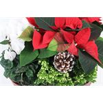 "Additional Images for 11"" Christmas Small Oval   (Case: 4)"