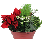 """Additional Images for 11"""" Poinsettia Planter    (Case: 2)"""
