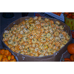 Additional Images for Decorative Dried Accents Tiger Striped Baby Pumpkins