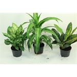 """Additional Images for 6"""" Tropical (Pack 8)"""