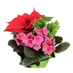 "Additional Images for 6"" Christmas Garden  (Poinsettia / Violet / Frosty Fern)  (Case 8)"
