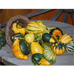 Additional Images for Decorative Dried Accents waxed gourds