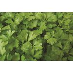 "Additional Images for 4.5"" Herbs Organic Parsley Italian      (Case 15)"