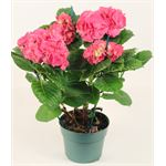 "Additional Images for 6"" Hydrangea   (3/4 Bloom)    (Case 6)"
