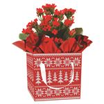 Additional Images for Indoor Garden Holiday Assorted Giftbox Kalanchoe   (Case 15)