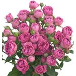 Additional Images for Rose Spray Local Hot Pink
