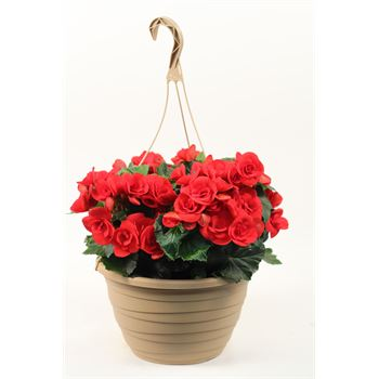 Spring Hanging Baskets & Bedding Material