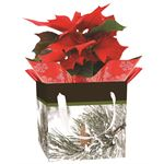 Additional Images for Indoor Garden Holiday Assorted Giftbox Poinsettia  (Case 15)