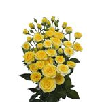 Additional Images for Rose Spray Local Yellow