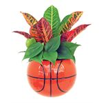 Additional Images for Indoor Garden Sports Pack SPO101 (Pack 9)