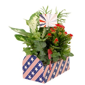 Indoor Garden Patriot Mail Box PATR303 (Pack 4)