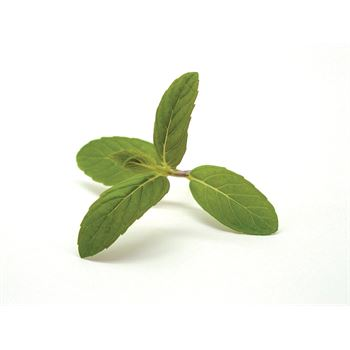"4.33"" Herbs      Mint Spearmint   (Case 10)"