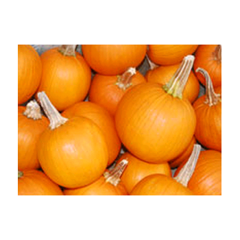 Decorative Dried Accents Pie Pumpkins