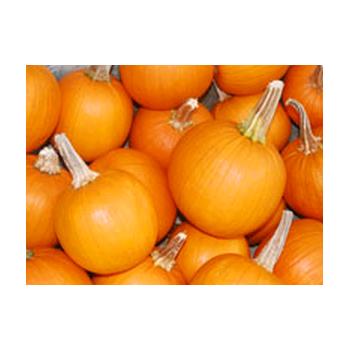 Decorative Dried Accents Pie Pumpkins