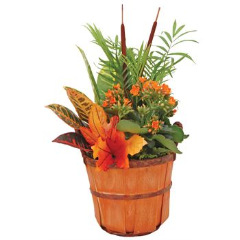 Indoor Garden BSHL107 Fall Bushel#7  (Pack 6)