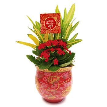 Indoor Gardens Chinese Mug CNMU105 (Pack 12)