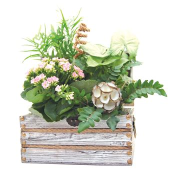 Indoor Garden Worthing Chest Small   (Pack 3)