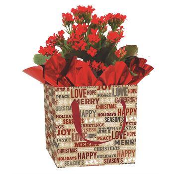 Indoor Garden Holiday Assorted Giftbox Kalanchoe   (Case 15)