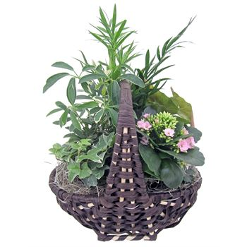 Indoor Garden  Empire EMPI502 (Pack 3)