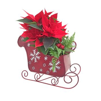Indoor Garden  Merry Christmas MERY101 (Pack 6)