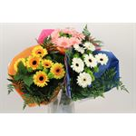"""Additional Images for Bouquet """"Everfresh"""" Mini Gerbera/Pom Upgrade (Pack 5)"""