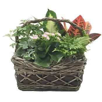 Indoor Garden Griselda Small    (Pack  4)