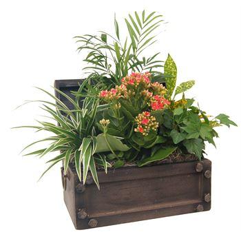 Indoor Garden Treasure Chest Small   (Pack 3)