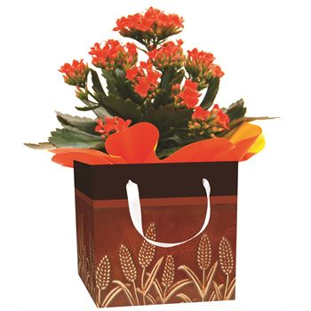 "4"" Flowering Fall Leaves Gift Box all Kalanchoes   (Case 15)"