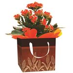 """Additional Images for 4"""" Flowering Fall Leaves Gift Box all Kalanchoes   (Case 15)"""