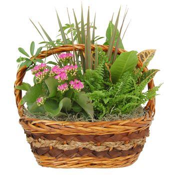 Indoor Garden Carter Wicker Small    (Pack 3)