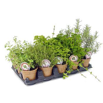 """4.5"""" Organic Herbs"""
