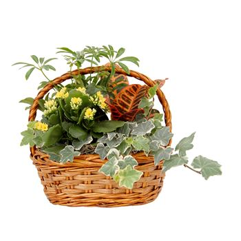 Indoor Garden Dunkirk Wicker Small    (Pack 4)