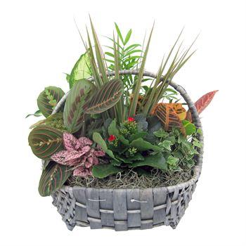 Indoor Garden Costal CSTL504 (Pack 2)