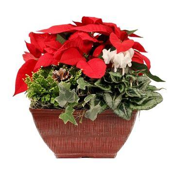 """10""""x10"""" Christmas Vintage Square Pot   (Case: 2)"""