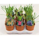 """Additional Images for 3"""" European Style Bulbs in Clay          (Case 18)"""