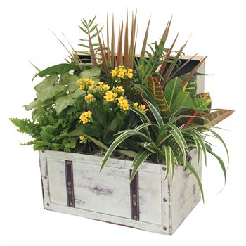 Indoor Garden Havana Medium Chest (Pack 2)