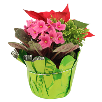 "6"" Christmas Garden  (Poinsettia / Violet / Frosty Fern)  (Case 8)"