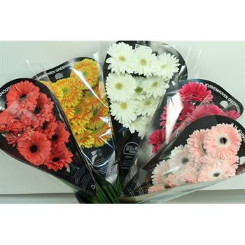 Gerbera Select Assorted