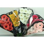 Additional Images for Gerbera Select Assorted