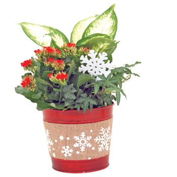 Indoor Garden Kawartha Small (Case: 6)