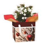 Additional Images for Indoor Garden Holiday Assorted Blooming Giftbox   (Case 15)