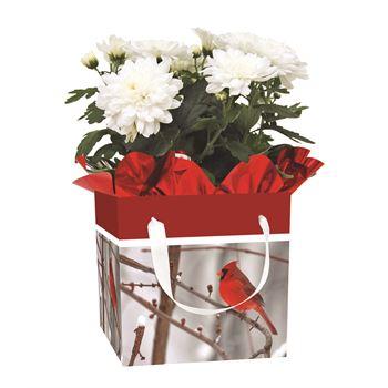 Indoor Garden Holiday Assorted Blooming Giftbox   (Case 15)
