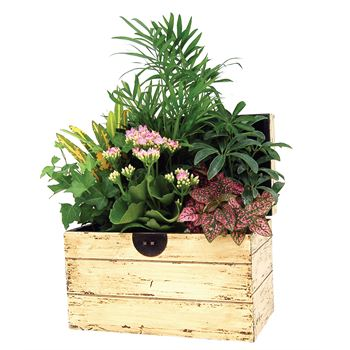 Indoor Garden Portage Chest Small   (Pack 3)
