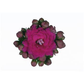 "4"" Calandiva Purple (Case 18)"