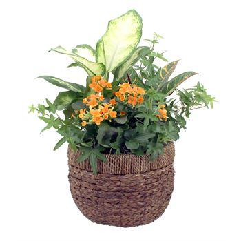 Indoor Garden Luxx Small    (Pack  5)
