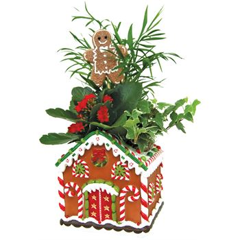 Indoor Garden Gingerbread Cottage  (Case 8)