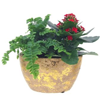 Indoor Garden Gold Flake Large    (Pack 4)