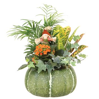 Indoor Garden Harvest Pumpkin Large   (Pack 3)